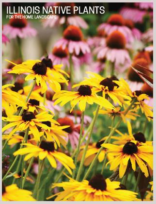 Illinois Native Plants for the Home Landscape