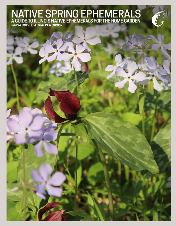 Native Spring Ephemerals: A Guide to Illinois Native Spring Ephemerals for the Home Garden