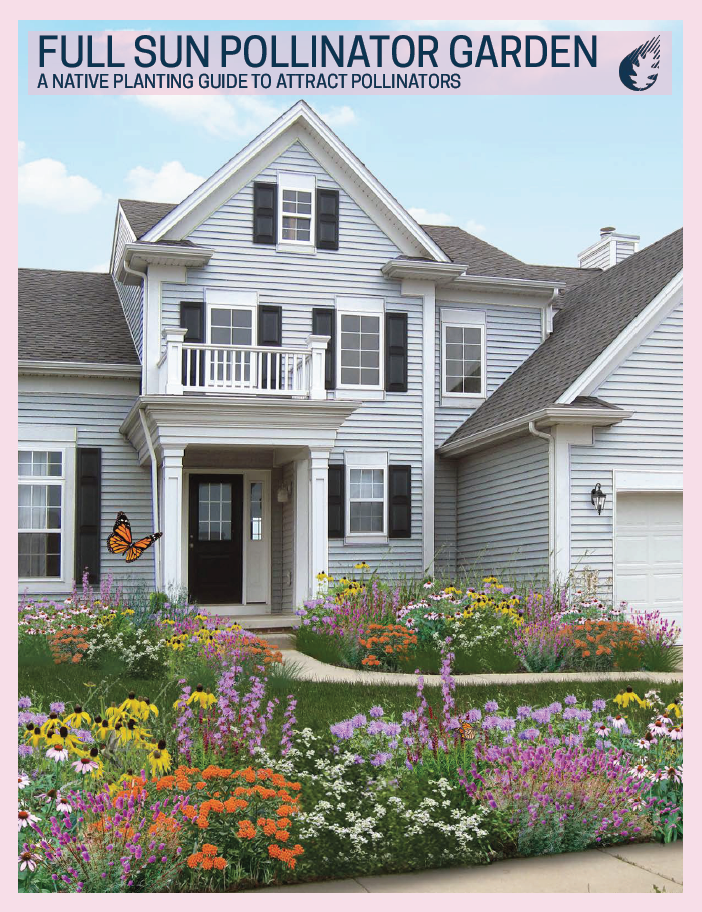 Full Sun Pollinator Garden- A Native Planting Guide to Attract Pollinators