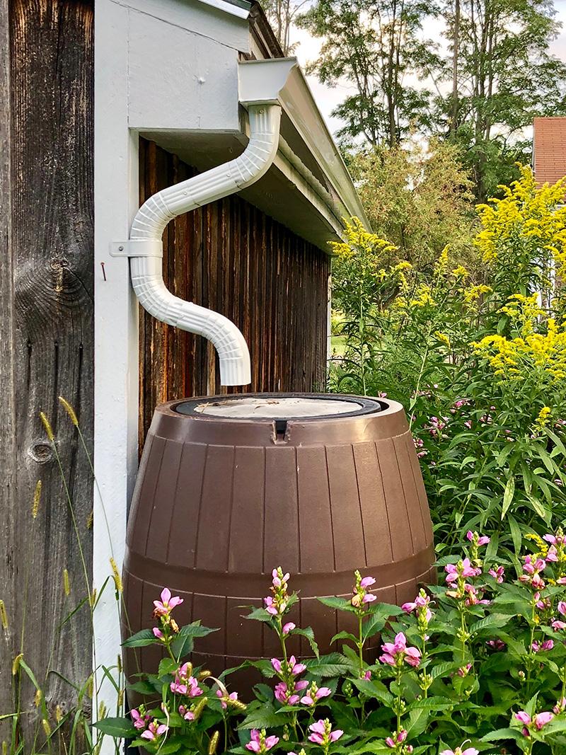 rain barrel under a downspout