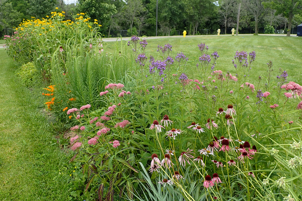 Native garden and lawn