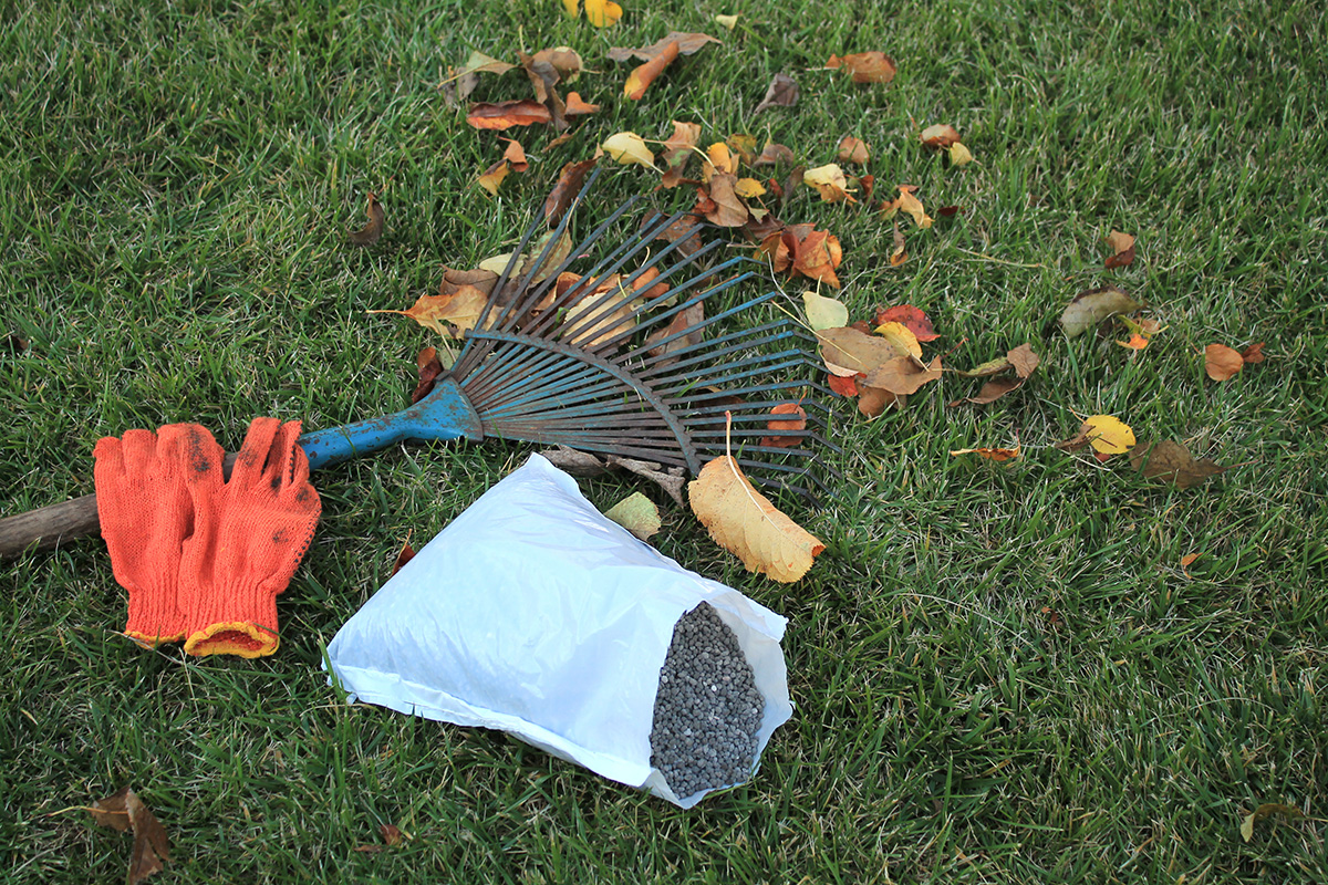 Autumnal foliage, fan rake, gloves and pack of fertilizer are on the lawn