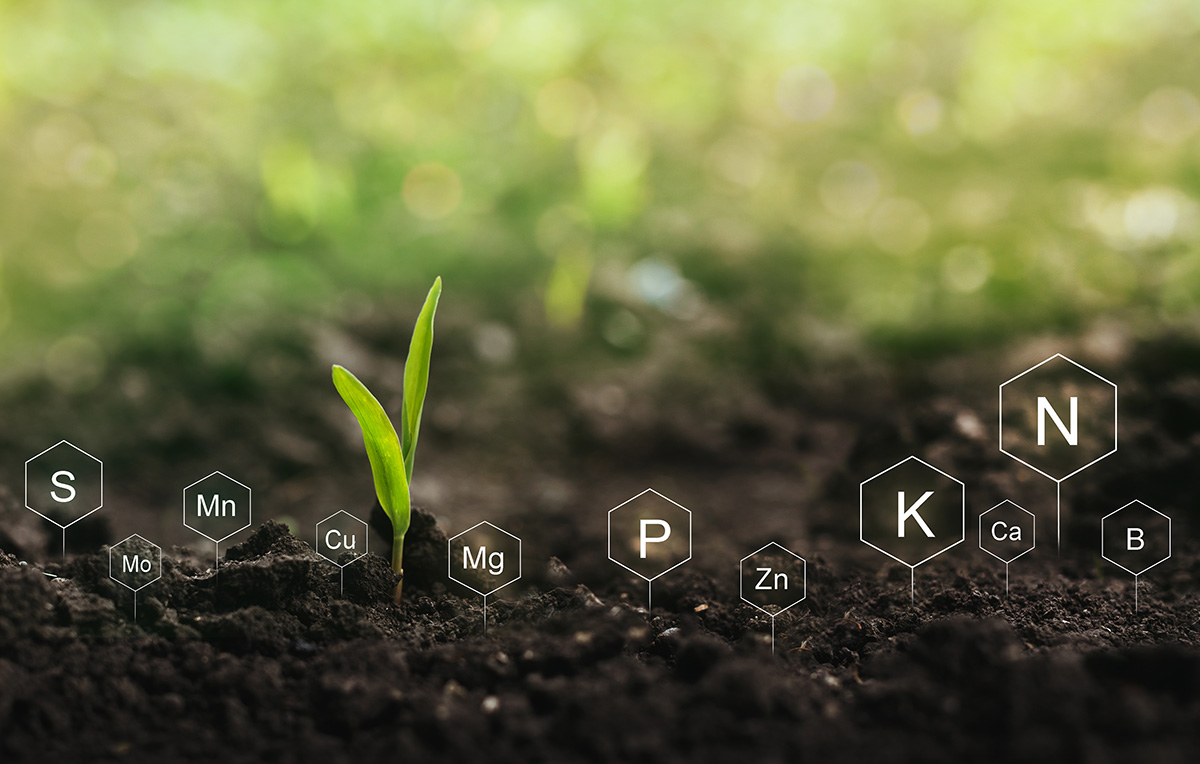 Soil with digital mineral nutrients icon